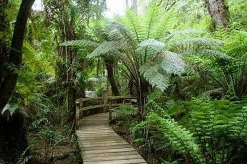 Mount Burrell Australia  city photos gallery : Silk Pavilions Bed & Breakfast Mt Burrell Offerte in corso