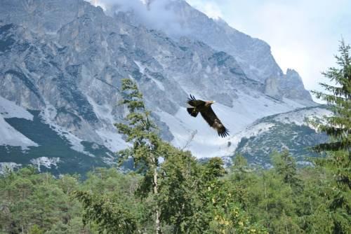 Park Hotel Dolomites Borca