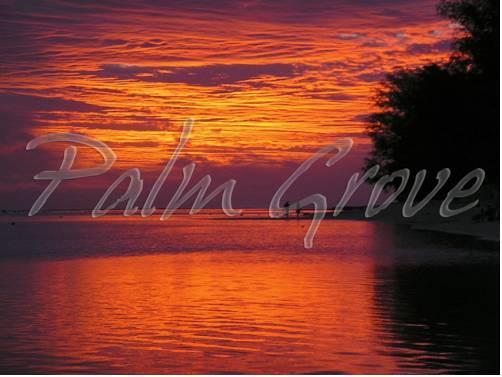 Palm Grove Resort Rarotonga