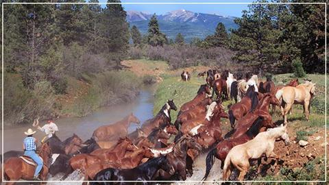 Majestic Dude Ranch Mancos Compare Deals