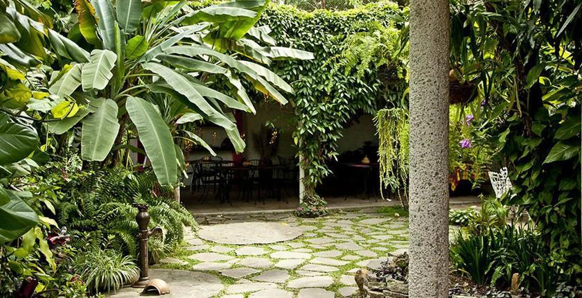 Arbol de fuego san salvador compare deals for Arbol de fuego jardin