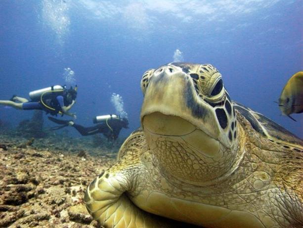 Manta dive gili air resort lombok compare deals - Manta dive gili air ...