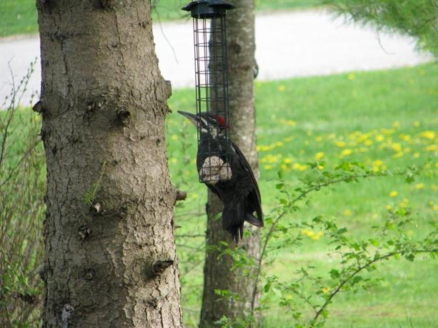 Avian Woods Bed And Breakfast