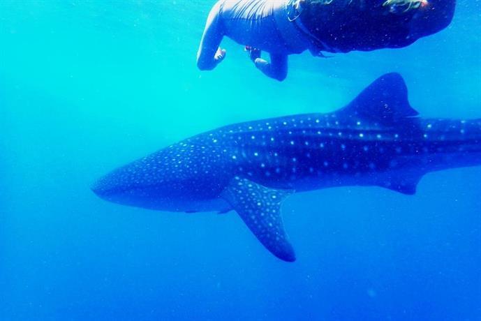 Afro Whale Shark Safari Beach Camp