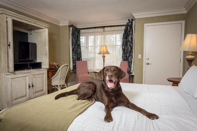 The Village Green - Pet-Friendly Hotel
