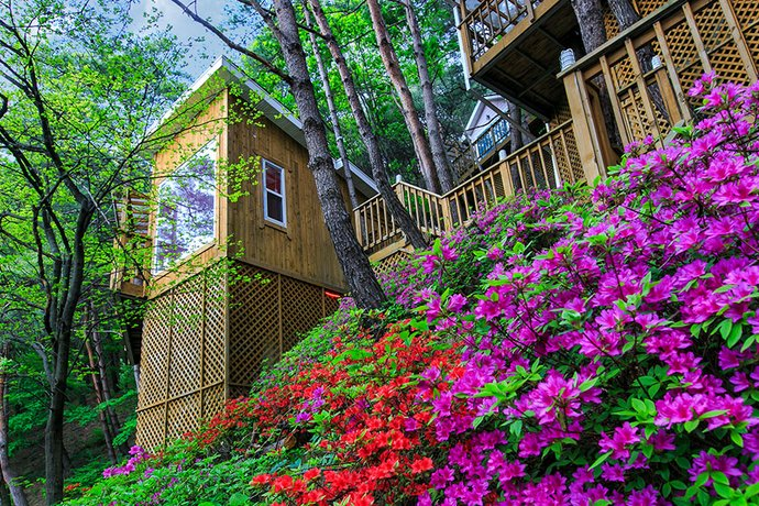 Hoengseong Forest Lover's Star Pension