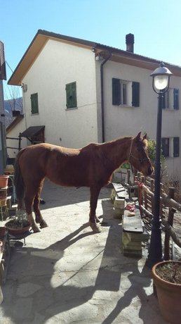 Guest House Drago Bianco